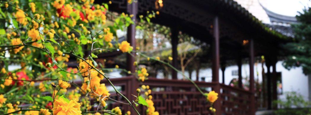 Portland: Lan Su Chinese Gardens + a birthday