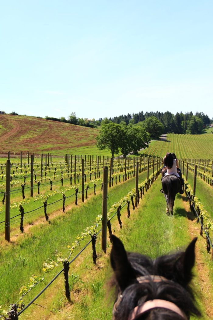 Explore: Wine Tours via Horseback Riding